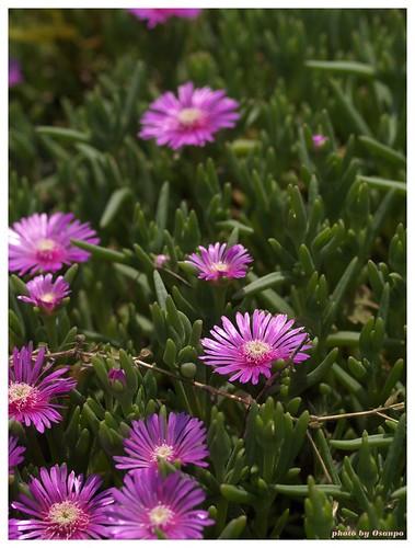 Flower 20090514 #01