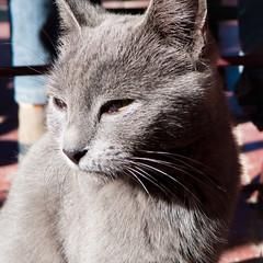 cat 4x4