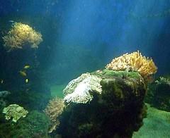 aquarium stockholm
