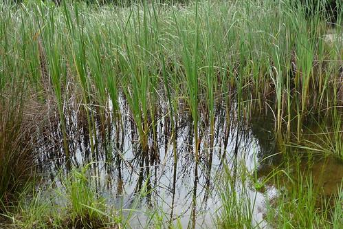 tadpoles' pond