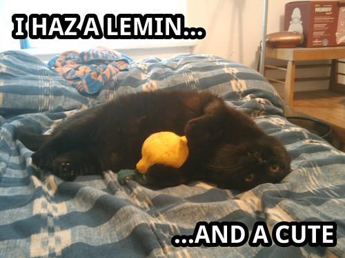 LOLskylar: I Haz a Lemin..