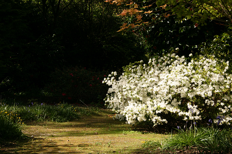 Pathway in an Irish Garden in Spring
