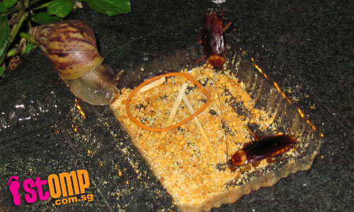 Snails and cockroaches share feast on muah chee leftovers
