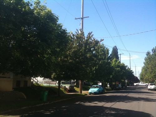 Short trees growing under primary power lines