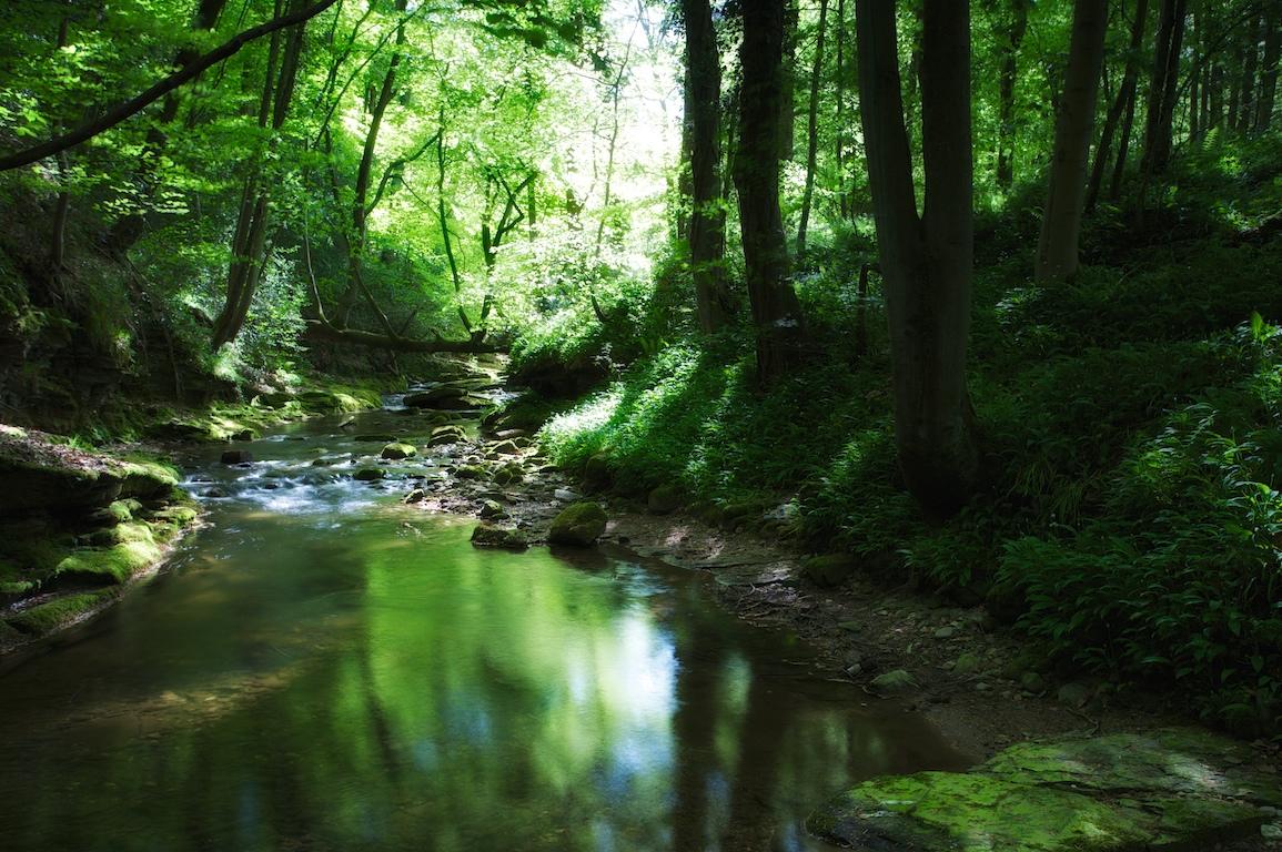 IMAGE: http://farm4.static.flickr.com/3362/4625843563_4ca1fb197e_o.jpg