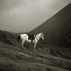 horse with no name (Elf-Y) Tags: horse mountain film indonesia volcano java slidefilm duotone e6 bromo fujivelvia50 positivefilm mtbatok auotcord