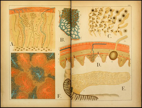 An atlas of Anatomy (FF Miller, 1879) h