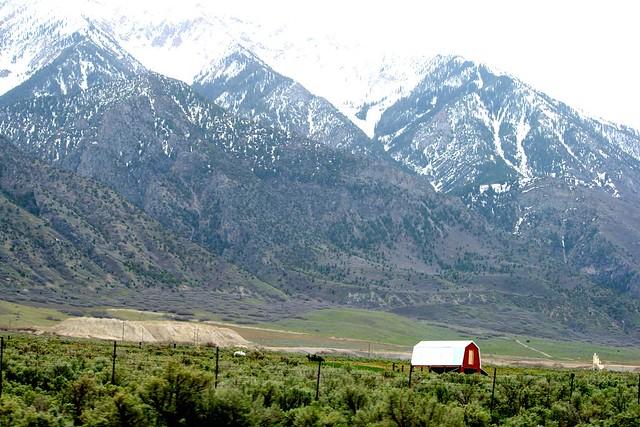 Rockies1