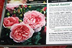 pink catolog rose