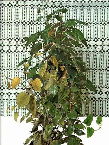 vine(pattern)