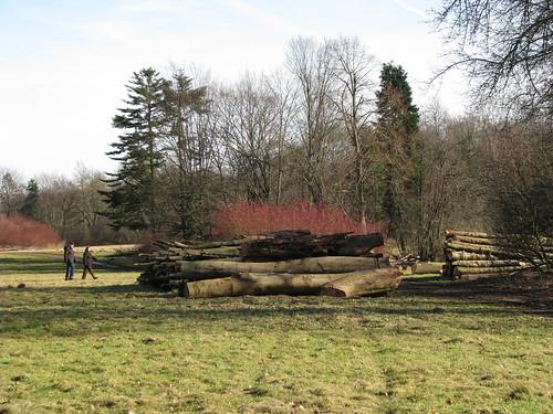 5-Troncos de árvores cortadas