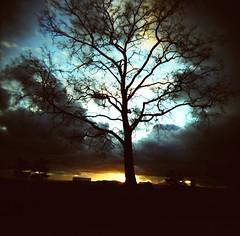 Yggdrasil (liquidnight) Tags: seattle park sunset sky colour tree 120 film clouds mediumformat bench holga xpro shadows cross kodak bare branches slide professional crossprocessing processing ektachrome holga120cfn 120cfn e100g cormacmccarthy