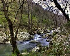 Río abajo (agvnono) Tags: cádiz hdr sendero arroyo tarifa tiradero facinas parquenatural 3xp photomatix alcornocales pnlosalcornocales