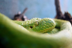 1416 - Python
