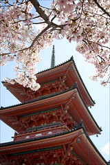 Kiyomizu Pagoda and Cherry Blossoms: Kyoto (mboogiedown) Tags: travel pink red japan architecture cherry asian temple japanese pagoda spring kyoto asia buddhist traditional blossoms culture buddhism unesco sacred sakura cherryblossoms kansai kiyomizu kiyomizudera worldheritage