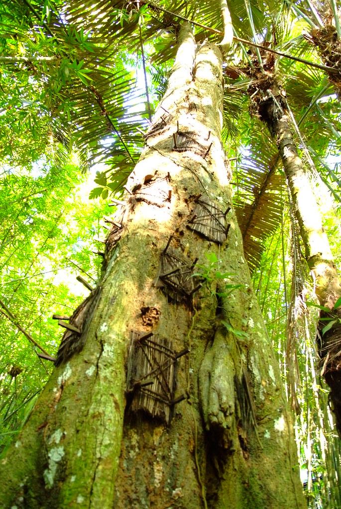 Kambira (Baby Grave), Tana Toraja, Sulawesi