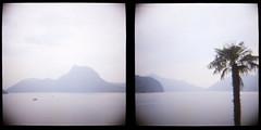 calm with palm (Funny Fish) Tags: two lake film mediumformat switzerland tessin ticino slide calm scan diana palmtree lagodilugano
