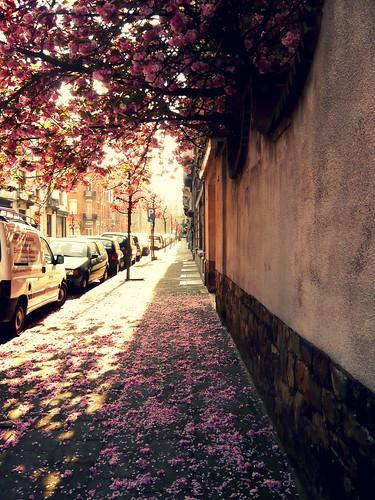 caminito de petalos rosas