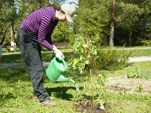I'm planting a tree
