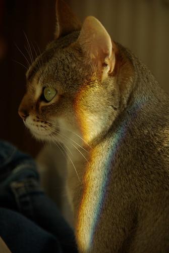 Spectral Flash