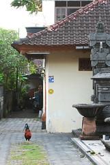 DSC_0838 (vividy69) Tags: bali indonesia nikon tokina   seminyak  2870mm  d80