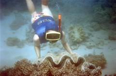 920803 Giant Clam (rona.h) Tags: underwater snorkelling 1992 greatbarrierreef cacique barrierreef giantclam ronah lizardisland vancouver27 cormorantpass