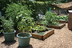 Garden progress May 001.JPG