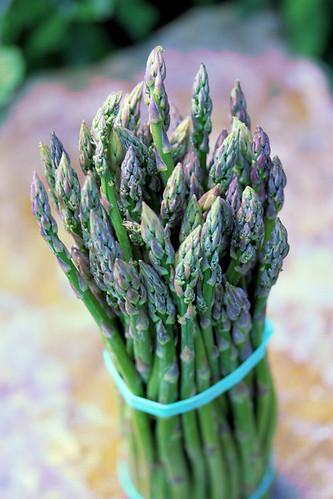 asparagus bunch 2804 R