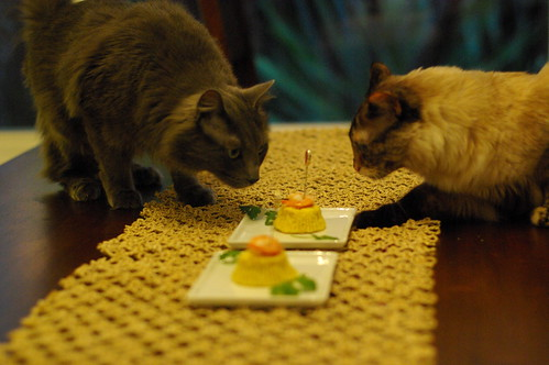 cats checking out birthday cake