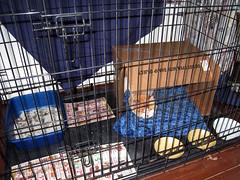 mugsy caged