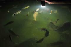 Let there be light! (jasonleong84) Tags: fish fountain nikon waterfeature terengganu sb800 50mmf14d d700 tanjungjara