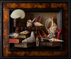 Still Life with Shells and Books (kevsyd) Tags: stilllife coral papernautilus kevinbest