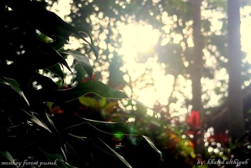 monkey forest pusuk lombok island indonesia