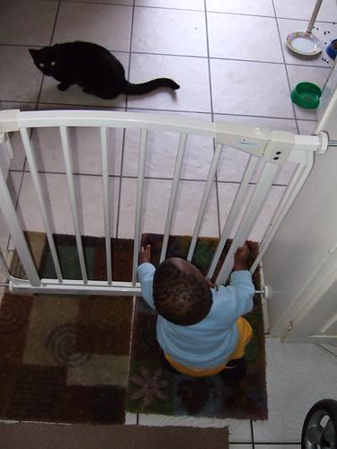Baby vs. Cat