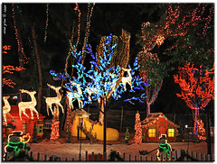 santa's enchanted forest (iCamPix.Net) Tags: santa train iso3200 rainbow explore christmasdecorations rides fav favourite mostviewed gameshows largestchristmastree santasenchantedforest 5647 lightdecorations mostwatched cannoneos1dsmarkiii canonef1635mmf28liiusmzoom icampixtechnologyleveli rainbowwalkway largestchristmasthemepark