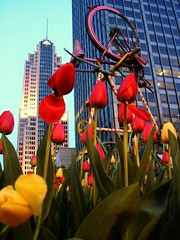 Tulips, Skyscrapers and a Bicycle (fobiafabio) Tags: deleteme5 deleteme8 usa chicago deleteme deleteme2 deleteme3 deleteme4 deleteme6 deleteme9 art deleteme7 bike bicycle america us illinois saveme skyscrapers tulips deleteme10 united tulip states cnbc fobiafabio