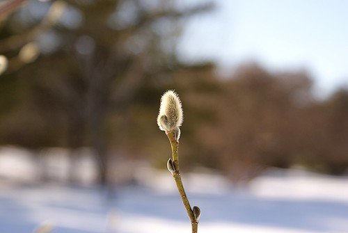 Fuzzy Seed