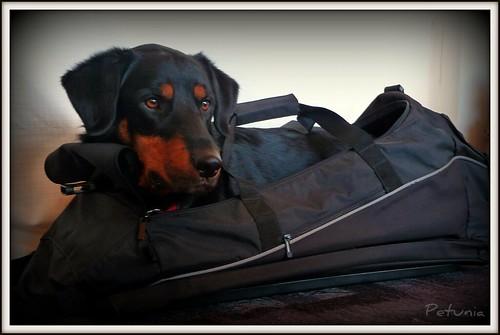 Veskehund 1