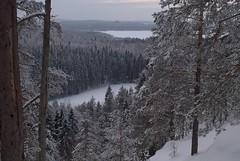 Vuorilampi, Neulamki, Eastern Finland (aaluva) Tags: suomi finland kuopio neulamki vuorilampi easternfinland itsuomi