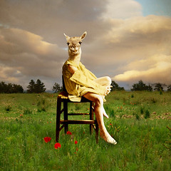 The brat (Martine Roch) Tags: boy cute nature field grass animal kid chair surreal poppies lad photomontage lama brat digitalcollage petitechose martineroch