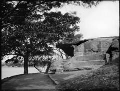 Sydney Harbour side scene, Mrs Macquarie's Road