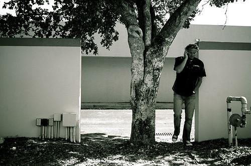 Tree, Cellphone, & Wall
