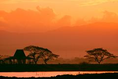 As i travel east (frborj) Tags: birthday morning silhouette sunrise nikon friend flickr swamp eastside bif unpopular nightheron d80 candaba frborj i