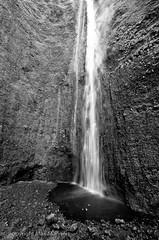 Waipio trip19 (Max Manners) Tags: max hawaii waipio sop