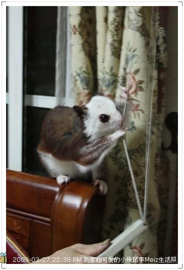 09年二三月小飛鼠Meiz生活照 (34)