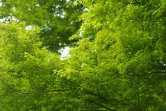 新緑・深緑