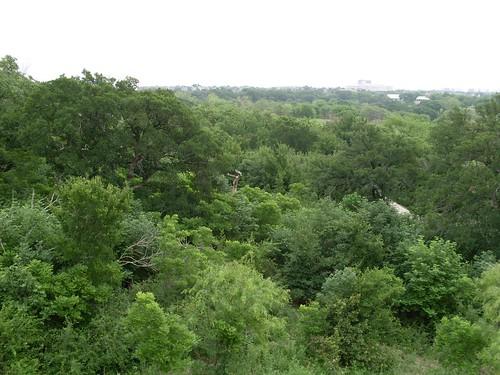 Arbor Hills Nature Preserve Panorama
