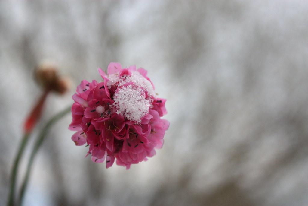 IMAGE: http://farm4.static.flickr.com/3364/3527653662_55800e1f5d_b.jpg