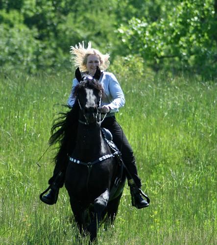 Friesian Stallion Keegan