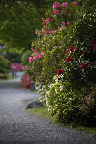 Japanese Garden in May - path with rhodos